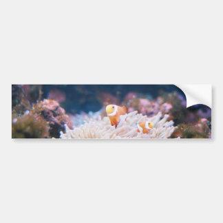 Clown Fish Bumper Sticker Car Bumper Sticker