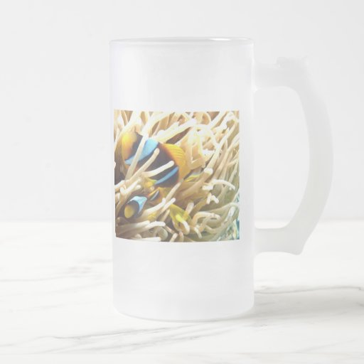 Clown Fish Glass Coffee Mugs