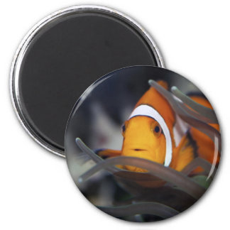 Clown-fish in anemone refrigerator magnets