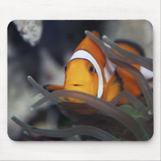 Clown-fish in anemone mouse pad