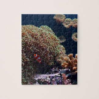 Clown fish in aquarium jigsaw puzzle