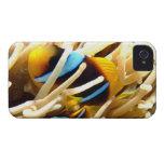 Clown Fish iPhone 4 Case