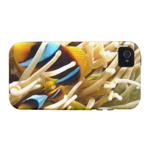 Clown Fish iPhone 4 Cases