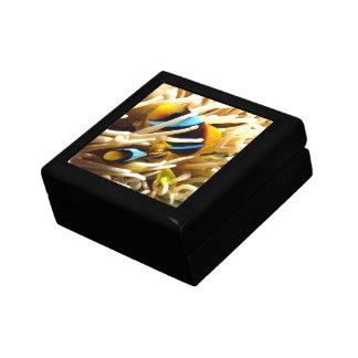 Clown Fish Jewelry Box