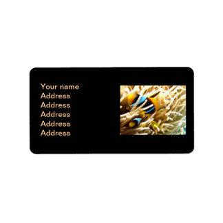 Clown Fish Personalized Address Labels