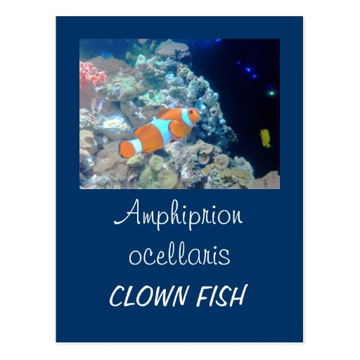 Clown fish post cards