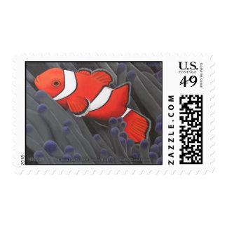 Clown Fish Postage