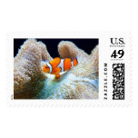 Clown fish stamp