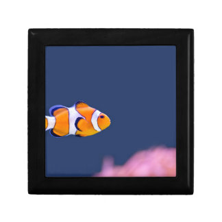 Clown fish swims in blue water with pink anemone gift box