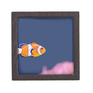 Clown fish swims in blue water with pink anemone keepsake box