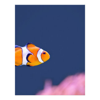 Clown fish swims in blue water with pink anemone letterhead