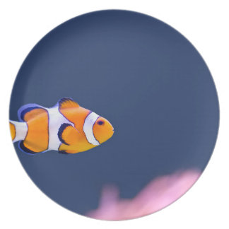 Clown fish swims in blue water with pink anemone melamine plate