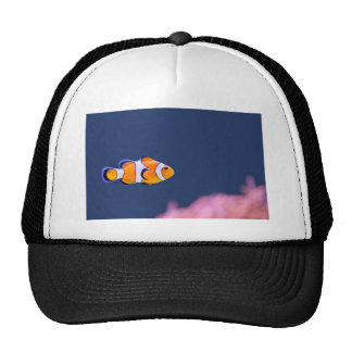 Clown fish swims in blue water with pink anemone trucker hat