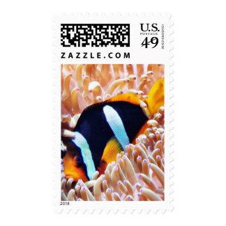 Clown Fish Tropical Fish Stamps