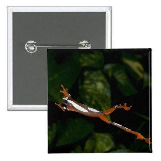 Clown Treefrog, Hyla leucophylatta, Native to Pinback Button