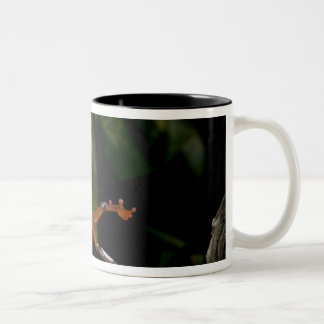 Clown Treefrog, Hyla leucophylatta, Native to Two-Tone Coffee Mug