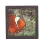 Clownfish 2 cajas de regalo de calidad