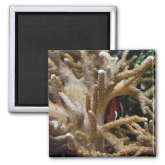 Clownfish 2 Inch Square Magnet