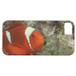 Clownfish 2 iPhone 5 fundas