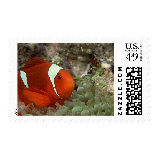 Clownfish 2 postage