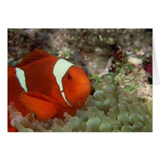 Clownfish 2 tarjeta de felicitación