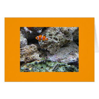 ClownFish - Amphiprion ocellaris Greeting Card