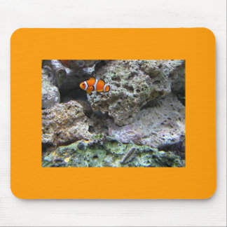 ClownFish - Amphiprion ocellaris Mouse Pad