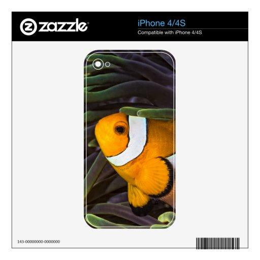 Clownfish anaranjado en la impresión de la anémona calcomanías para iPhone 4S