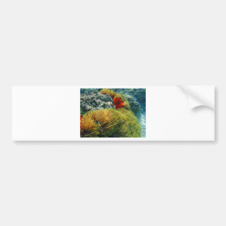 clownfish and anemone bumper sticker