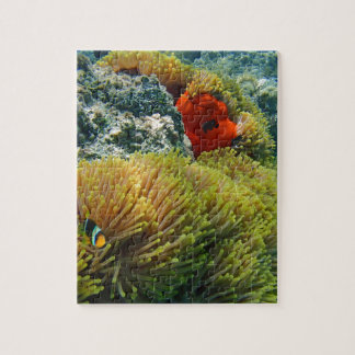 clownfish and anemone puzzle