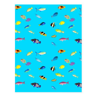 Clownfish and Tangs Scatter Postcard