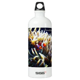 Clownfish Anemonefish