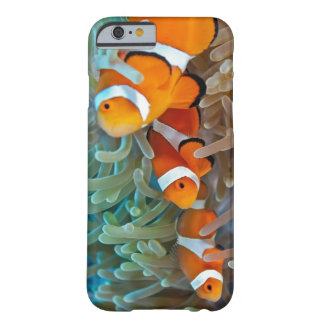 Clownfish Barely There iPhone 6 Case