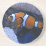 Clownfish Coaster