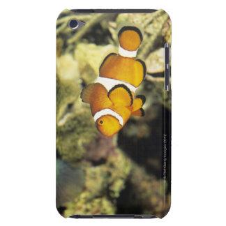 Clownfish comunes (oaris del Amphiprion), iPod Case-Mate Protector
