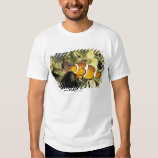 Clownfish comunes (ocellaris del Amphiprion), Remera