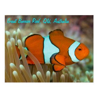 Clownfish en la postal de la gran barrera de coral