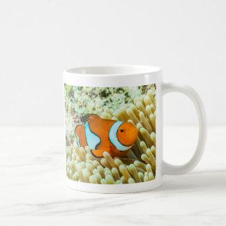 Clownfish en la taza de café de la gran barrera de