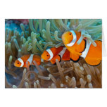 Clownfish Greeting Cards