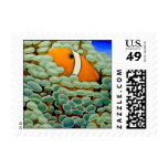Clownfish in Frogspawn Coral Postage Stamp