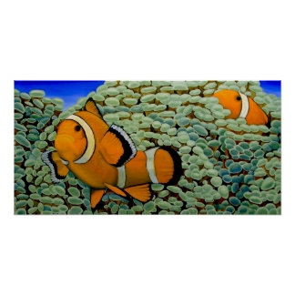 Clownfish in Frogspawn Coral Poster