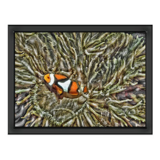 Clownfish in Sea Anemone Postcard