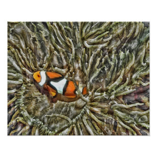 Clownfish in Sea Anemone Poster