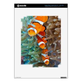 Clownfish iPad 3 Skins