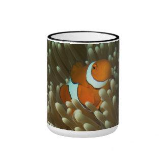 Clownfish lindo en la gran barrera de coral taza de dos colores