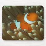 Clownfish lindo en Mousepad Alfombrilla De Ratón