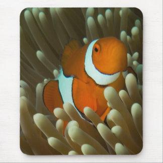 Clownfish lindo en Mousepad