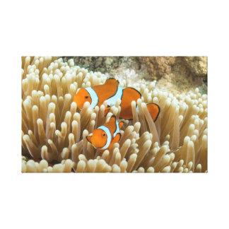 Clownfish lindo envolvió la impresión de la lona impresiones de lienzo