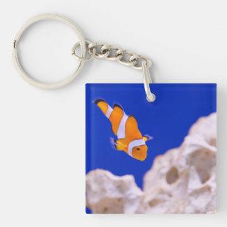 Clownfish Llavero Cuadrado Acrílico A Una Cara