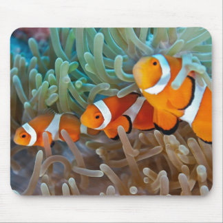 Clownfish Mouse Pad